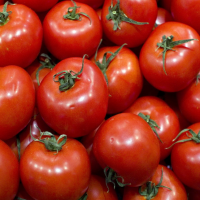 Fresh Delicious  Tomatoes