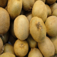 Organic fresh kiwi fruit wholesale price