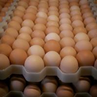 Fresh Farm Chicken Table Eggs