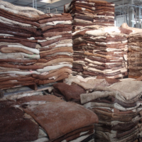 Good Quality Wet/Dry Salted Donkey Hide