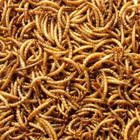 High Protein Nutrient Dried  Meal worm