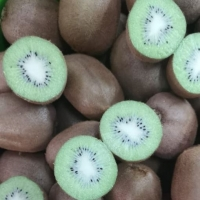 New Crop fresh Kiwi Fruit