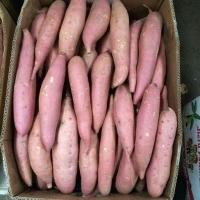 Sweet Potatoes Fresh From Farm