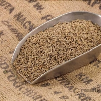 Thai Cumin Seeds Suppliers, Manufacturers, Wholesalers and