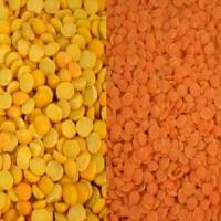 Green Lentils / Red Lentils / Yellow Lentils