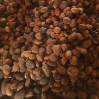 Organic Shea Nuts