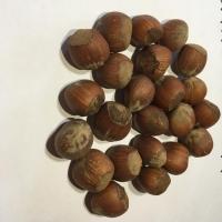 title='Hazelnuts In-shell'