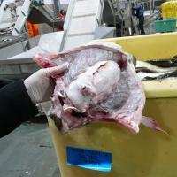 Frozen Cod Backbones With Swim Bladder