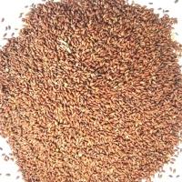 Asaliya Seed