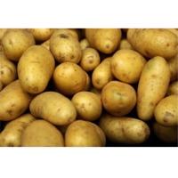 No Mud Fresh Russet Potatoes