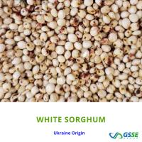 Sorghum White