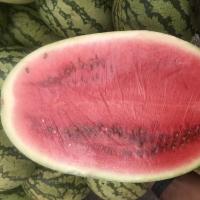 Zebra Watermelon