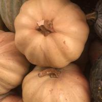 Pumpkin Brown