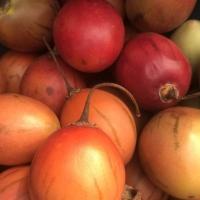 Tamarillo Tree Tomato