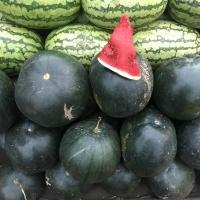 Watermelon Round Green Dark African