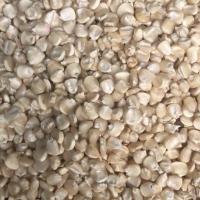 Maize White