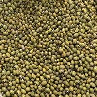 Green Beans Big
