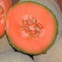 Cantaloupe Orange Melon