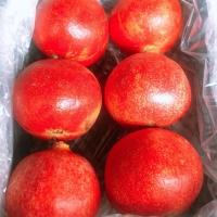 title='Wonderful Pomegranate'