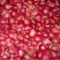 Small Onion by Ice Mac Exim  Supplier from India  Product Id