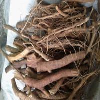 Eurycoma Longifolia ( Tongkat Ali)