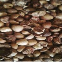 Betel Nut (Kacang Pinang)