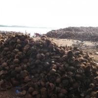 Dry Coconut Shell Husk For Biofuel