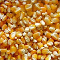 Animal Feeds (Processed Maize)