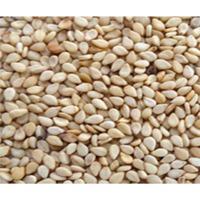 Non GMO Organic Natural Sesame Seeds