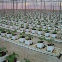 EF-2PB Easyfil Two Plant Planter Bag