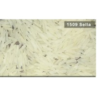 1509 White Sella