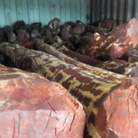 Red Sandalwood Logs