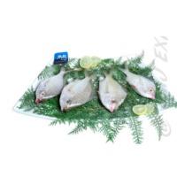 Silver Biddy Fish