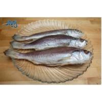 Croakers Fish