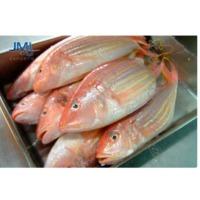Japanese Thread Fin Bream Fish