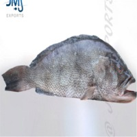Aerolated Grouper