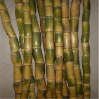 title='Sugarcane'