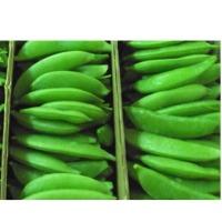 Succulent Sugar Snap Peas