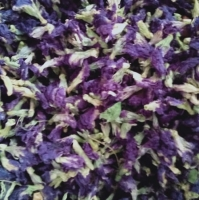 Bluepea Butterfly Dry Flowers