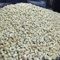 Cashew Nut Kernel W180-w500