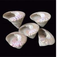 Trocas Shell