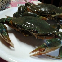 Affordable Fresh Live Mud Crabs