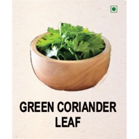 Green Coriander Leaf