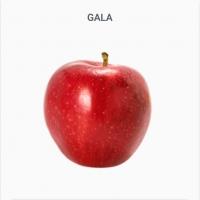 Gala - Apple