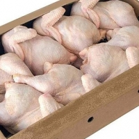 Frozen Poultry Meat (Chicken) Halal