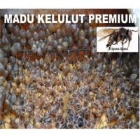 Kelulut Trigona Stingless Bee Honey