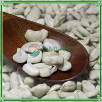 Cashew Nuts Kernel LP