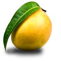 Mango Puree/ Pulp