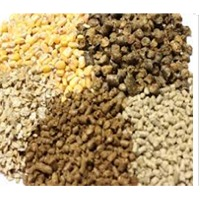 Wanted : Animal Feed Yellow Maize : Manufacturers, Suppliers