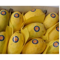 Pakistani Mango Suppliers, Manufacturers, Wholesalers and